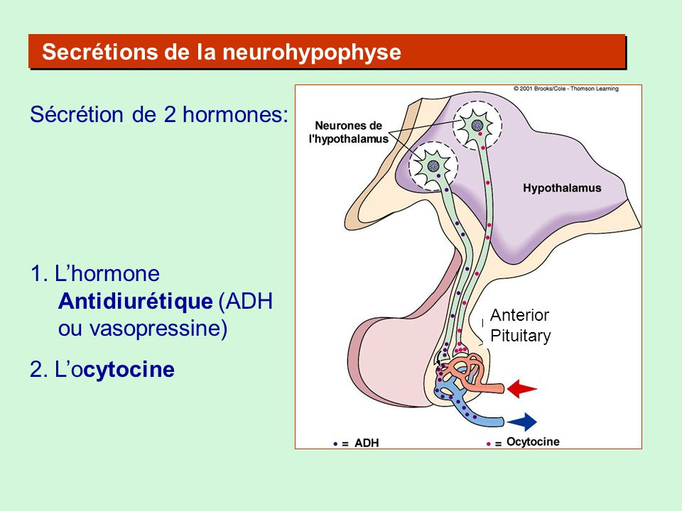 Secrétions de la neurohypophyse