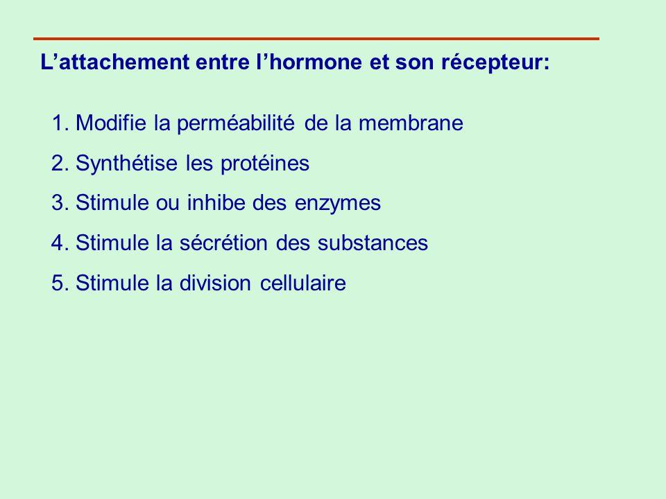 L'attachement entre l'hormone et son récepteur: