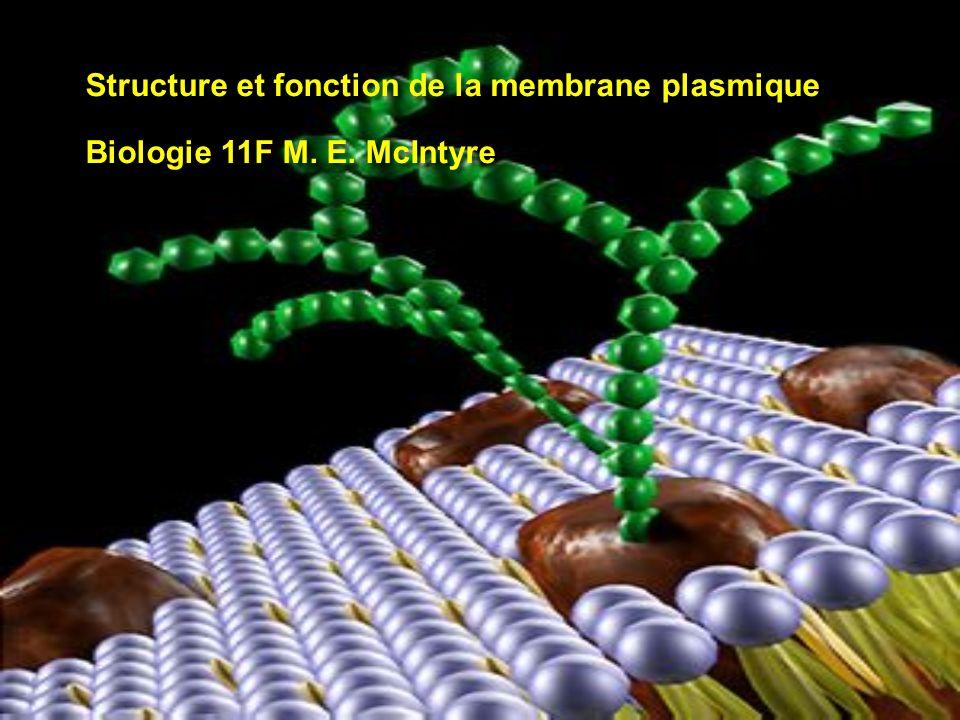 Structure et fonction de la membrane plasmique