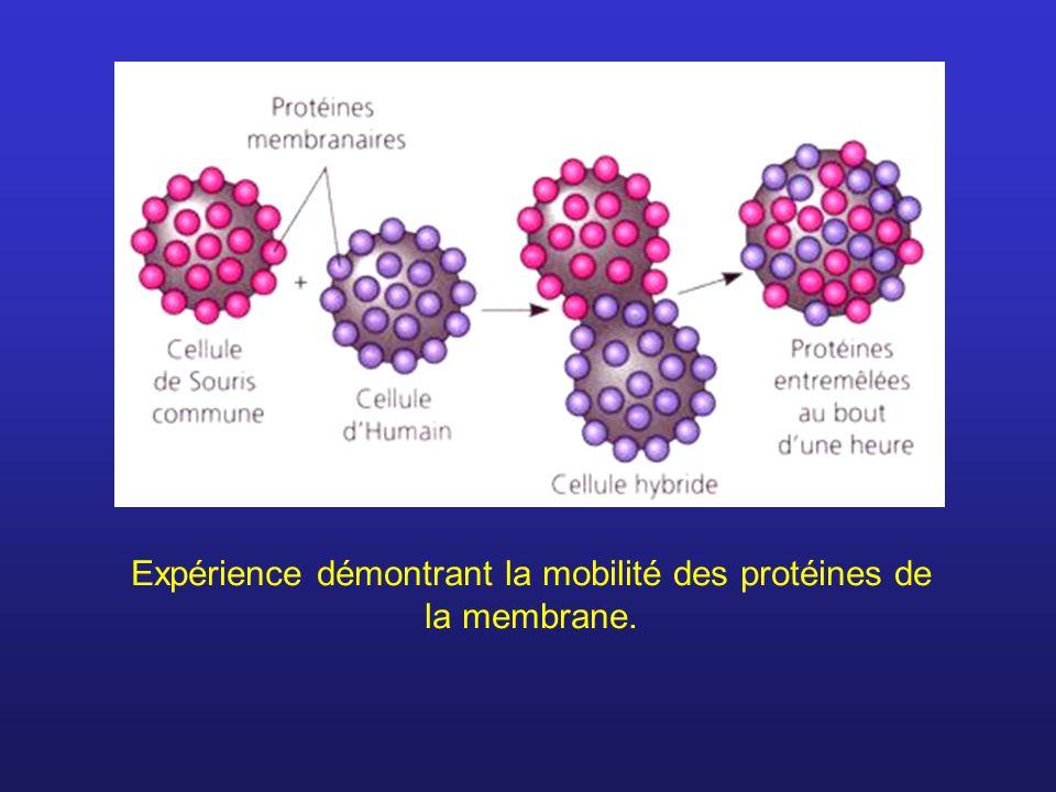 Expérience démontrant la mobilité des protéines de la membrane.