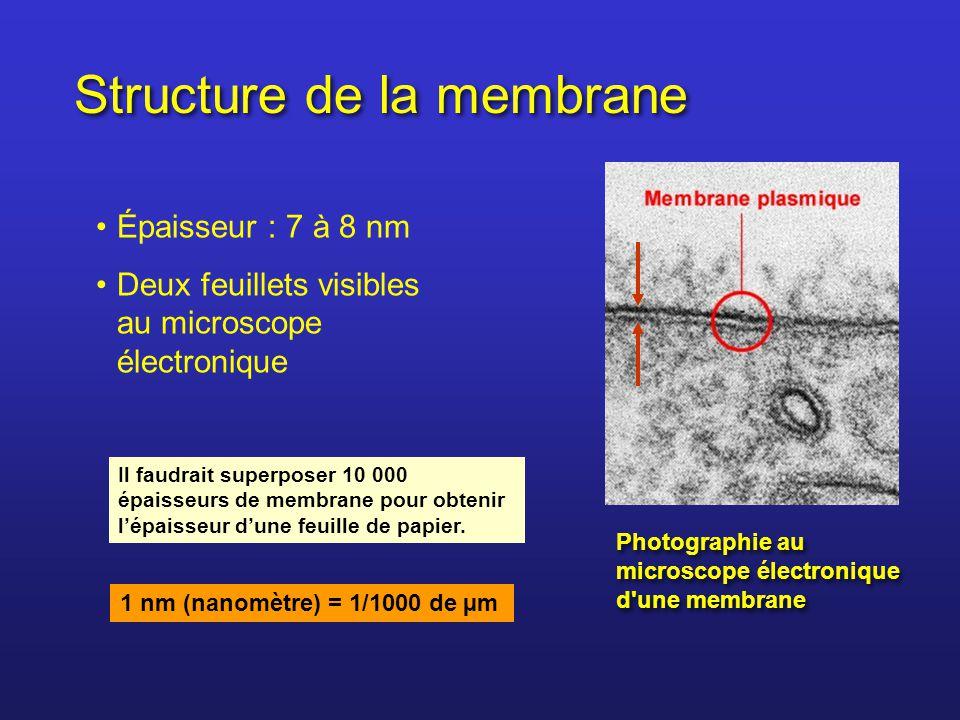 Structure de la membrane