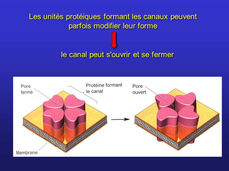 Les unités protéiques formant les canaux peuvent parfois modifier leur forme