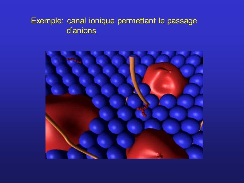 Exemple: canal ionique permettant le passage d'anions