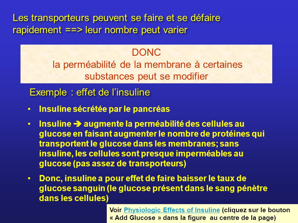 Exemple : effet de l'insuline