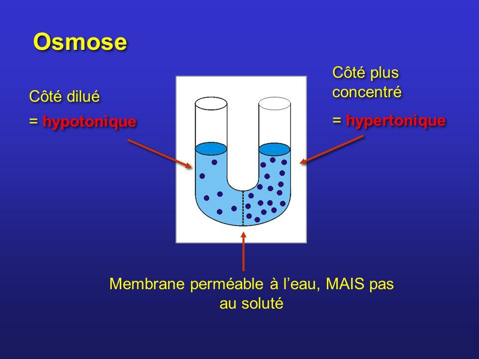 Membrane perméable à l'eau, MAIS pas au soluté