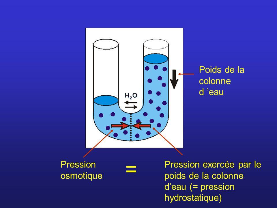 = Poids de la colonne d 'eau Pression osmotique