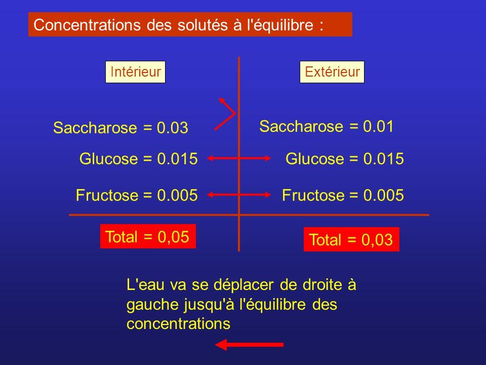 Concentrations des solutés à l équilibre :