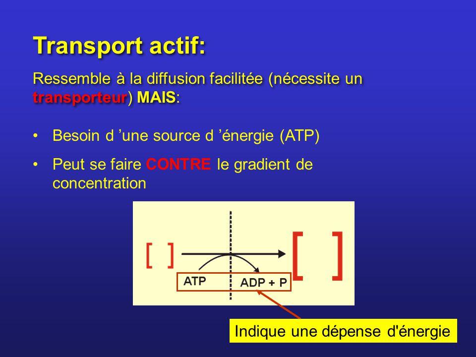 Transport actif: Ressemble à la diffusion facilitée (nécessite un transporteur) MAIS: Besoin d 'une source d 'énergie (ATP)