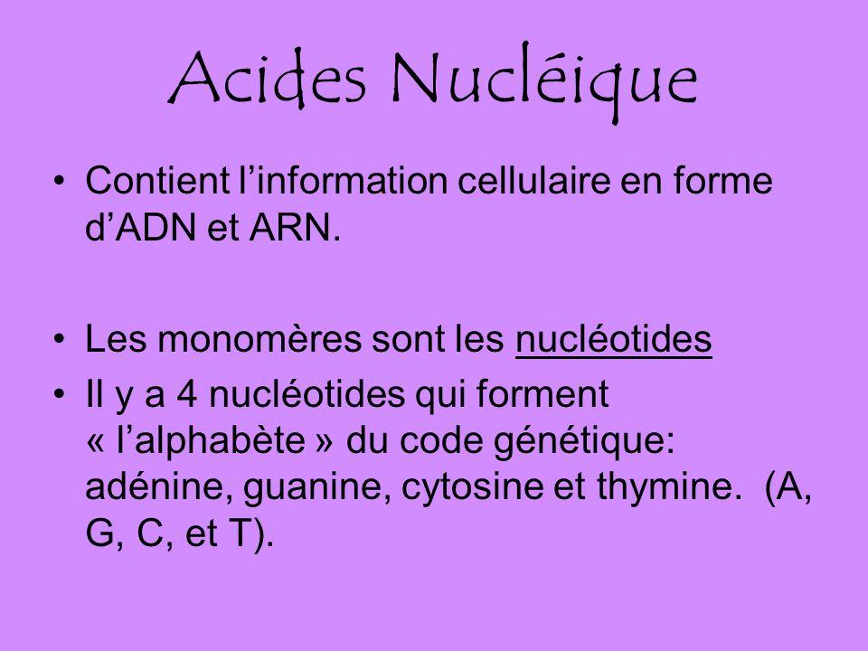 Acides Nucléique Contient l'information cellulaire en forme d'ADN et ARN. Les monomères sont les nucléotides.