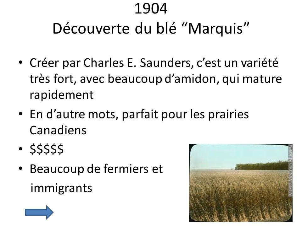 1904 Découverte du blé Marquis