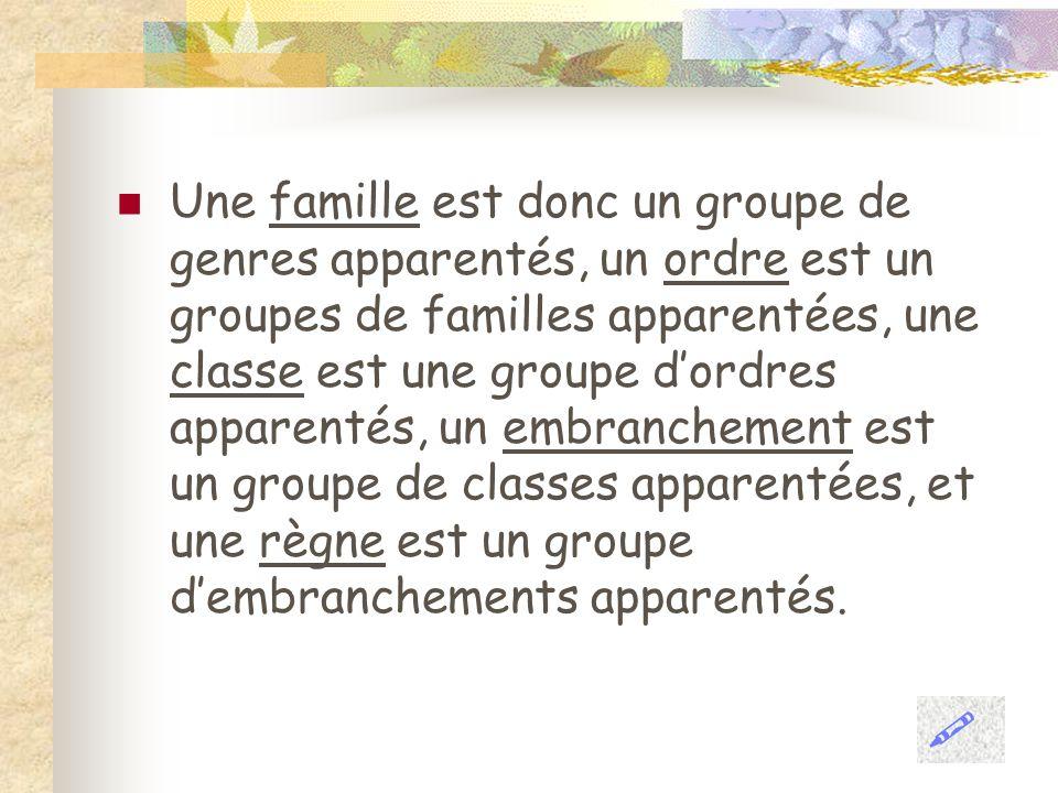 Une famille est donc un groupe de genres apparentés, un ordre est un groupes de familles apparentées, une classe est une groupe d'ordres apparentés, un embranchement est un groupe de classes apparentées, et une règne est un groupe d'embranchements apparentés.