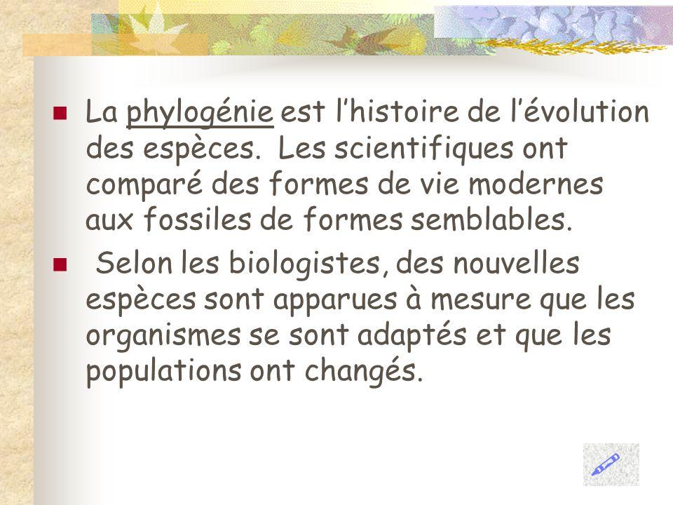 La phylogénie est l'histoire de l'évolution des espèces
