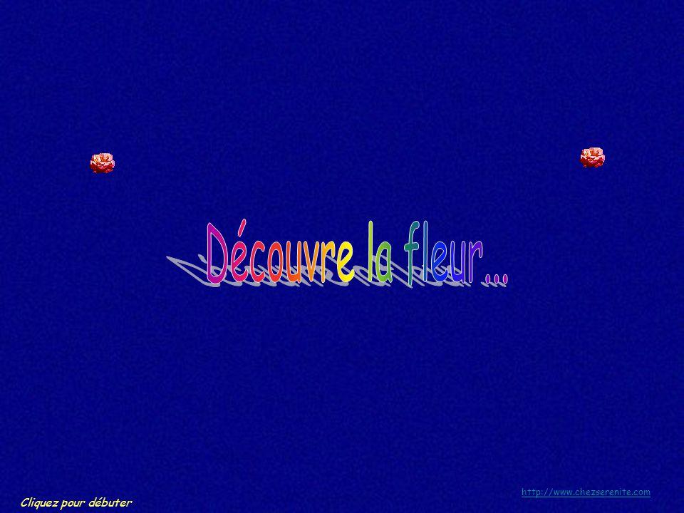 Découvre la fleur... http://www.chezserenite.com Cliquez pour débuter