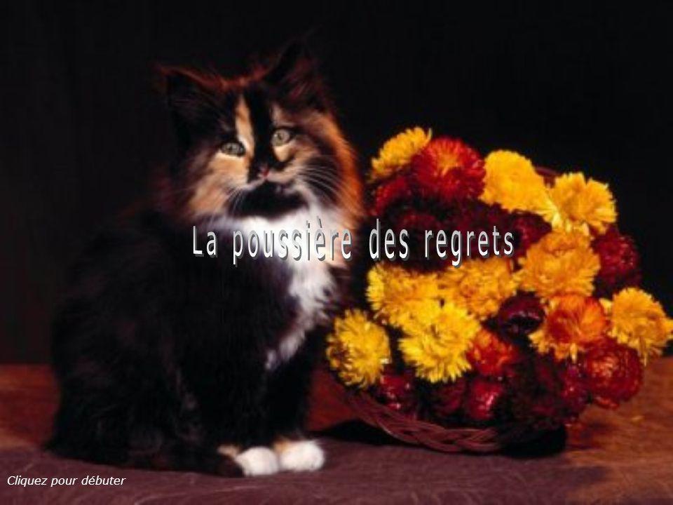 La poussière des regrets