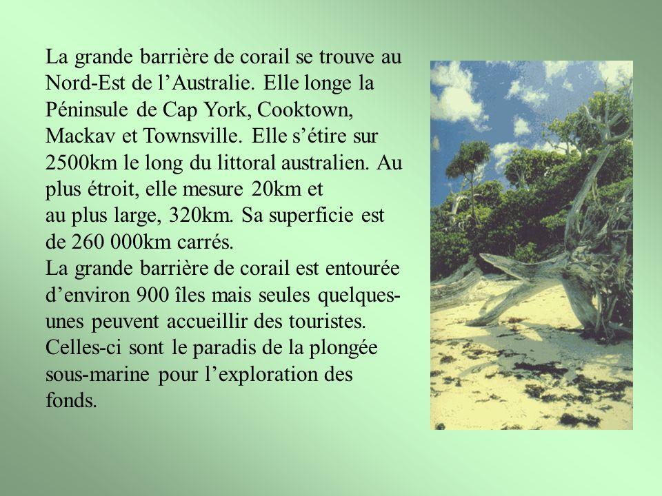 La grande barrière de corail se trouve au Nord-Est de l'Australie
