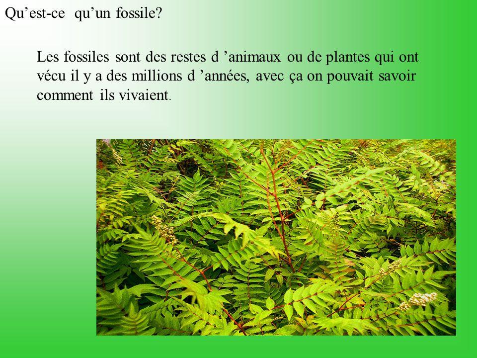 Qu'est-ce qu'un fossile