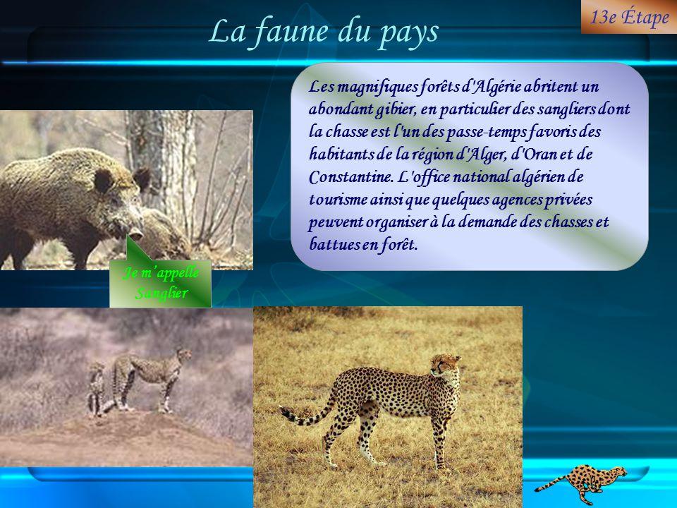 La faune du pays 13e Étape.