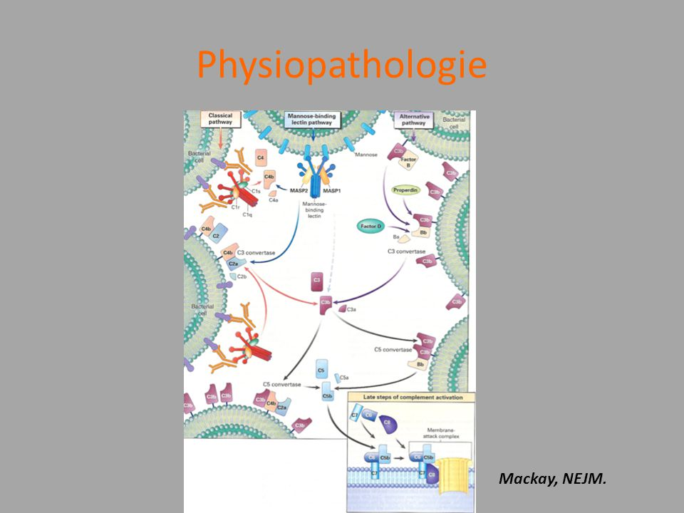 Physiopathologie Mackay, NEJM.