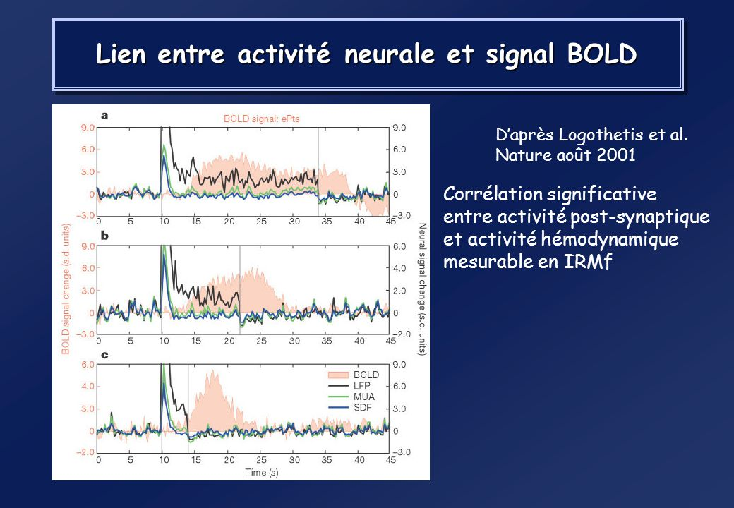 Lien entre activité neurale et signal BOLD