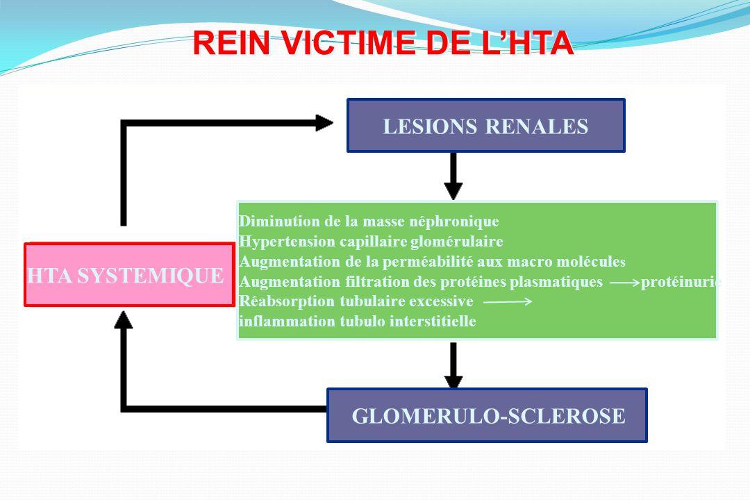 REIN VICTIME DE L'HTA LESIONS RENALES HTA SYSTEMIQUE
