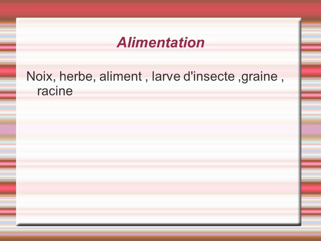 Alimentation Noix, herbe, aliment , larve d insecte ,graine , racine