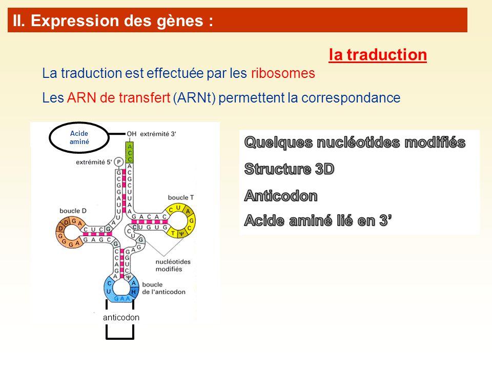 II. Expression des gènes :