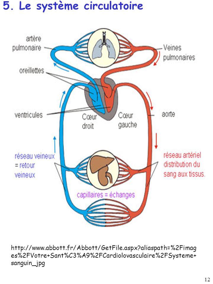 5. Le système circulatoire
