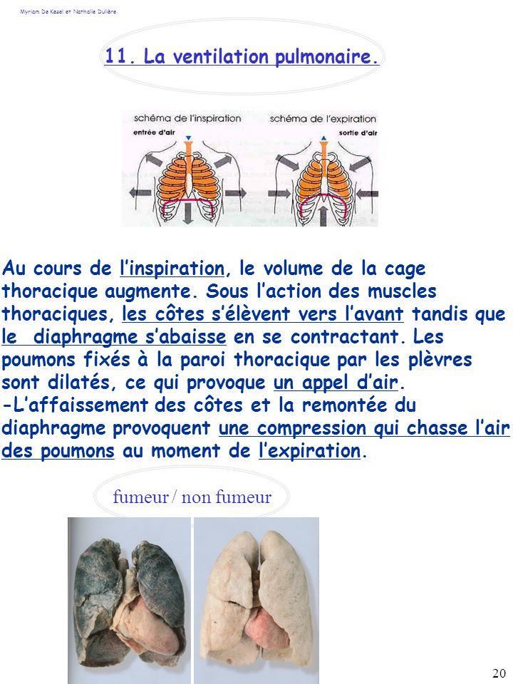 11. La ventilation pulmonaire.