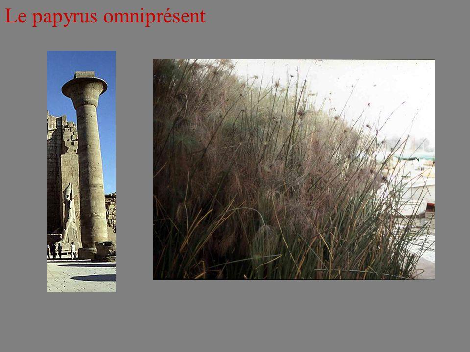 Le papyrus omniprésent