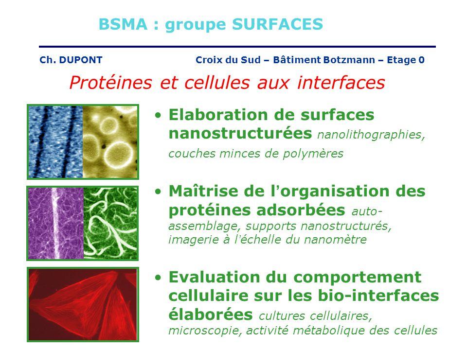 Protéines et cellules aux interfaces