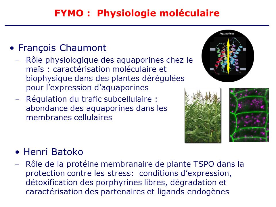 FYMO : Physiologie moléculaire