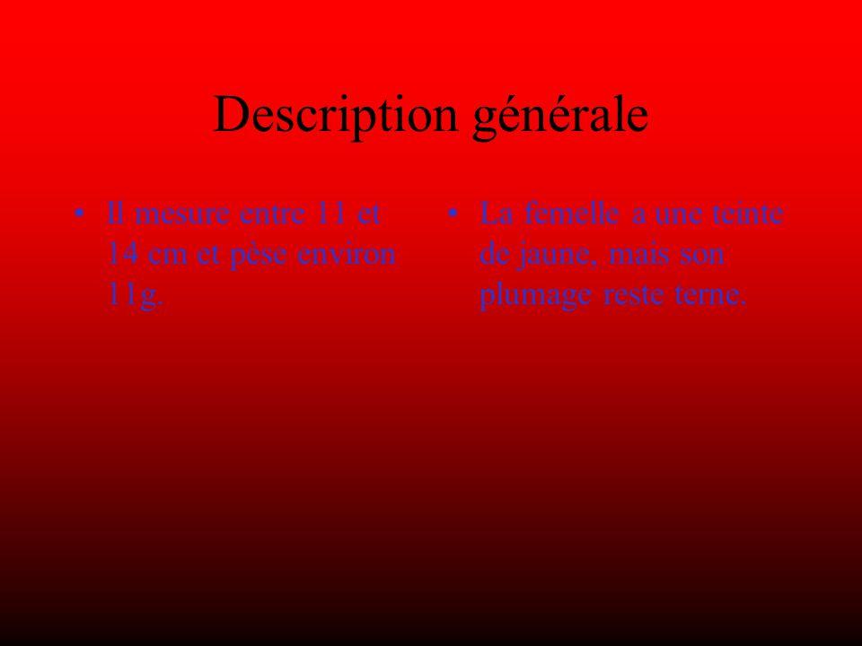Description générale Il mesure entre 11 et 14 cm et pèse environ 11g.