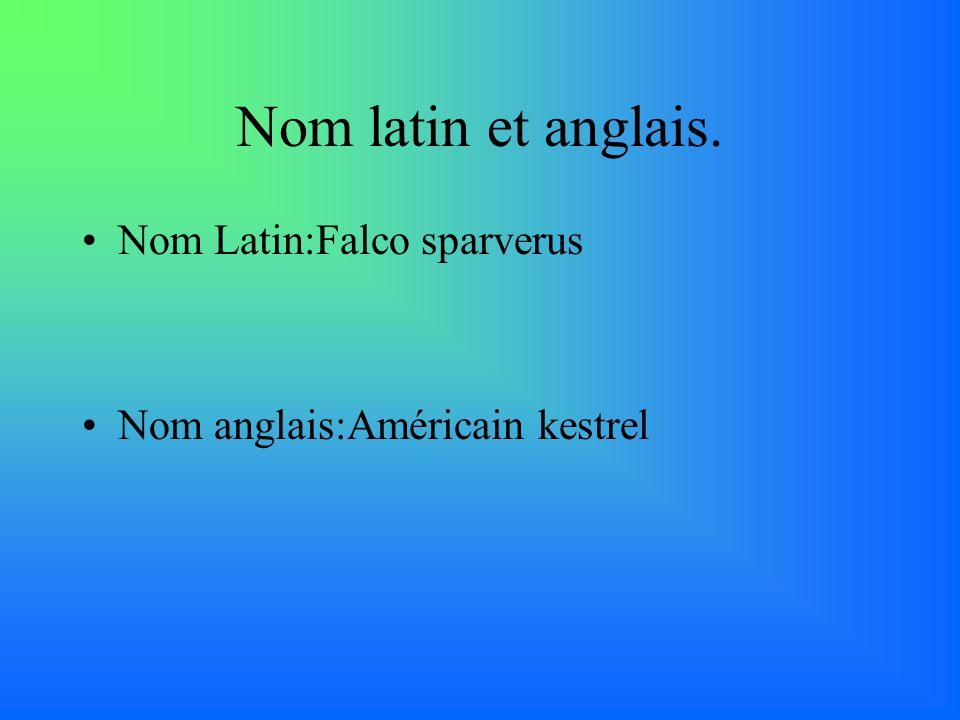Nom latin et anglais. Nom Latin:Falco sparverus