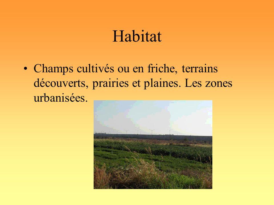 Habitat Champs cultivés ou en friche, terrains découverts, prairies et plaines.