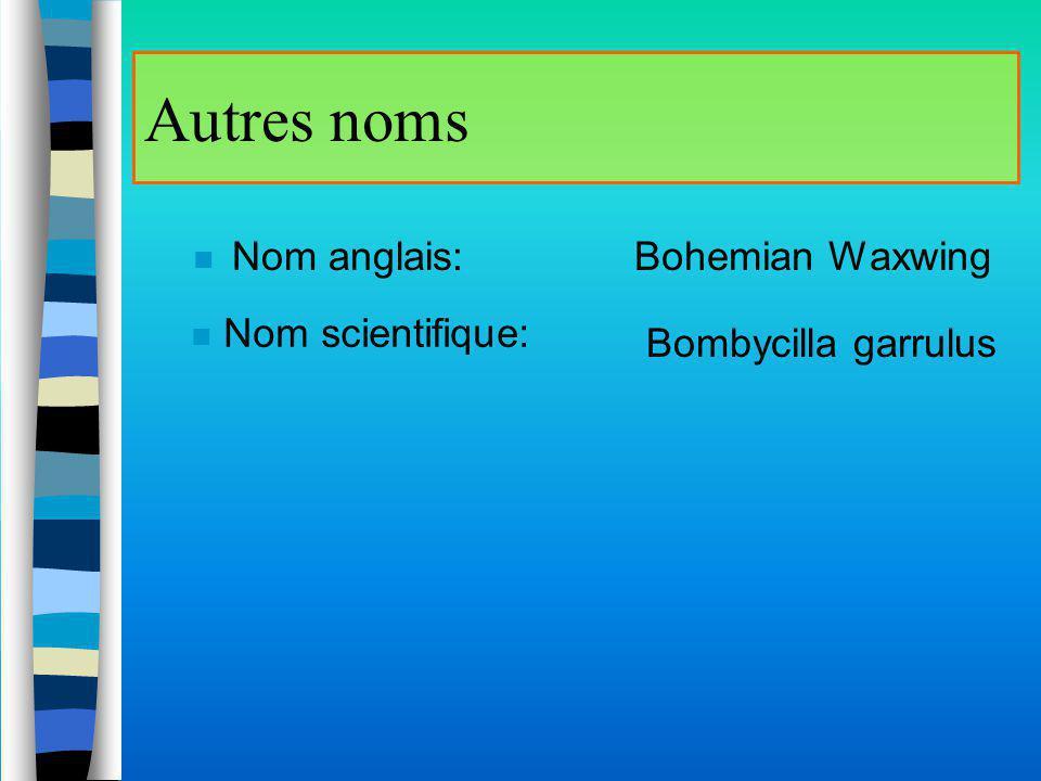 Autres noms Nom anglais: Bohemian Waxwing Nom scientifique: