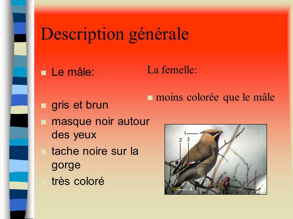 Description générale La femelle: Le mâle: moins colorée que le mâle