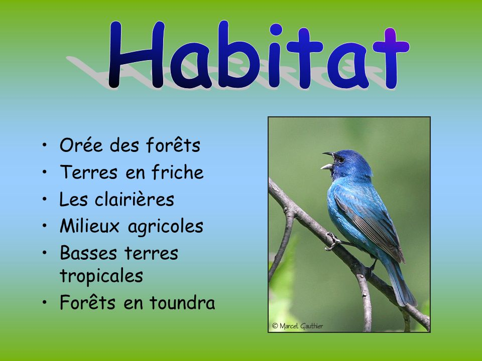 Habitat Orée des forêts Terres en friche Les clairières