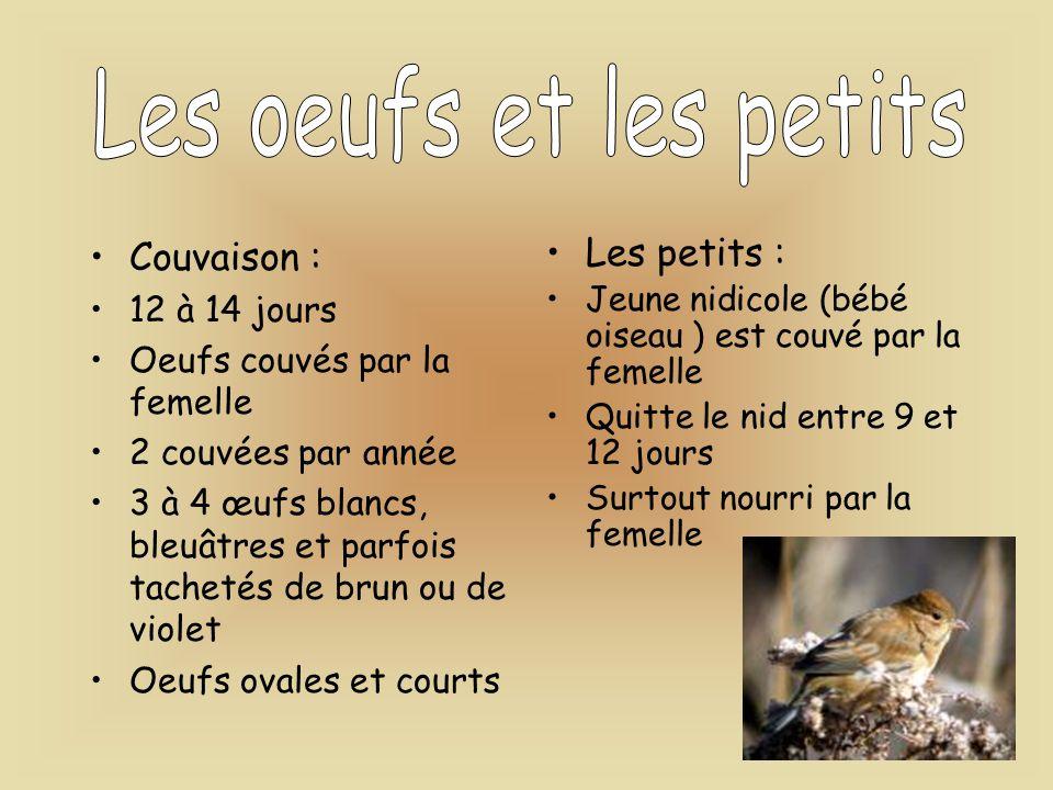 Les oeufs et les petits Couvaison : Les petits : 12 à 14 jours