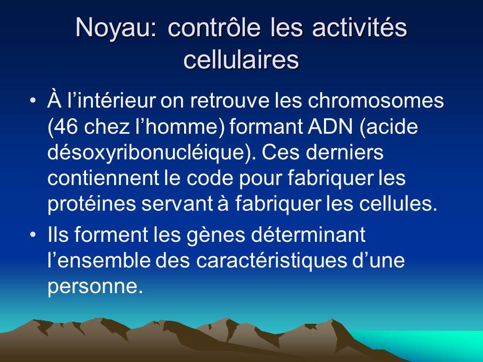 Noyau: contrôle les activités cellulaires