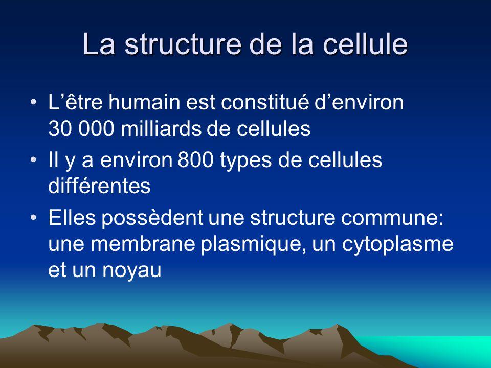 La structure de la cellule