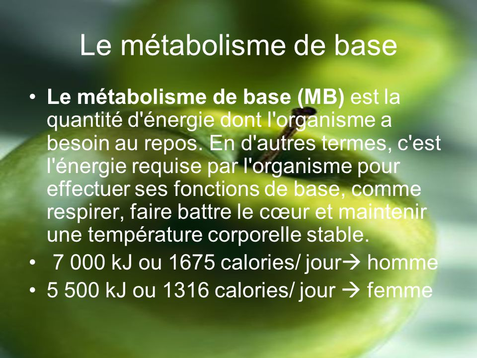 Le métabolisme de base