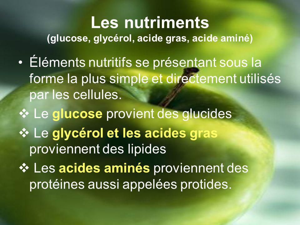 Les nutriments (glucose, glycérol, acide gras, acide aminé)