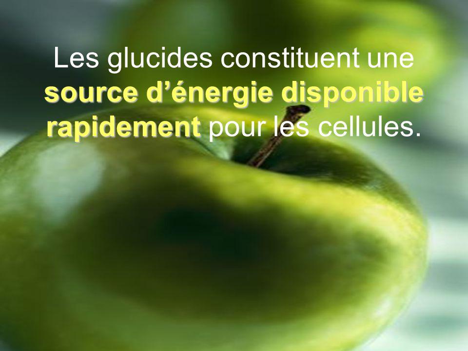 Les glucides constituent une source d'énergie disponible rapidement pour les cellules.