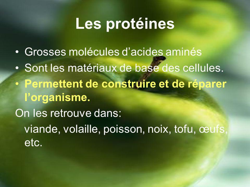 Les protéines Grosses molécules d'acides aminés
