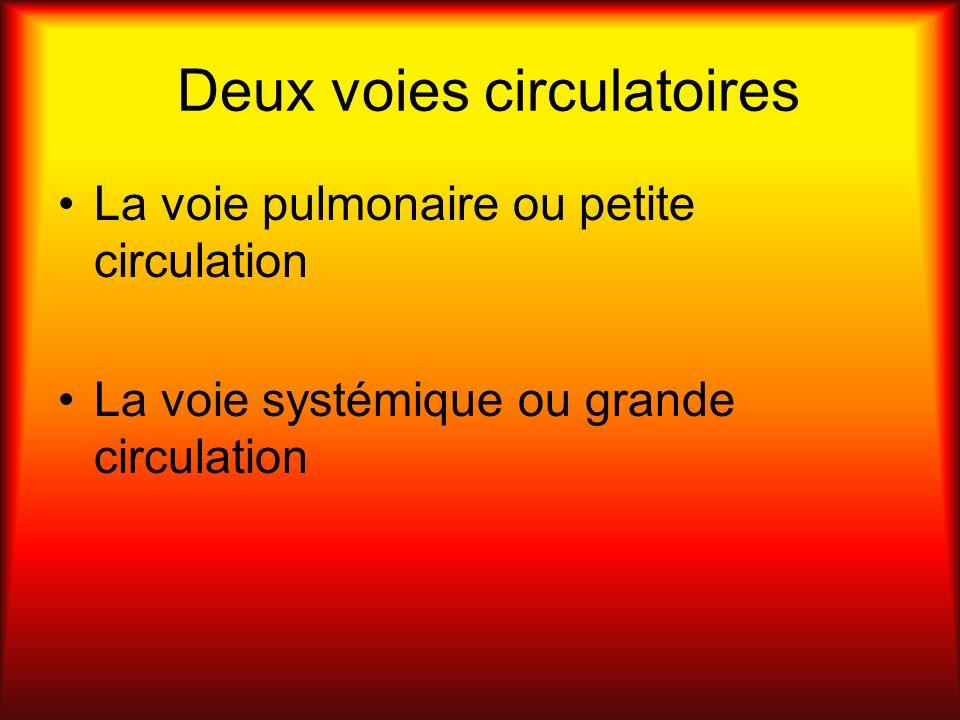 Deux voies circulatoires