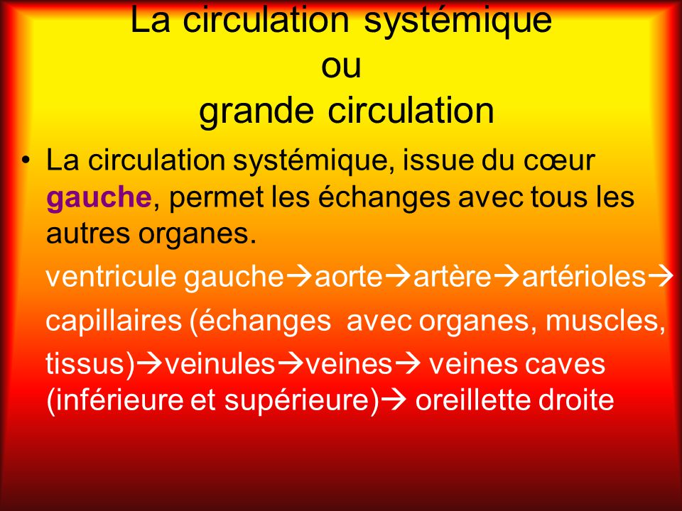 La circulation systémique ou grande circulation