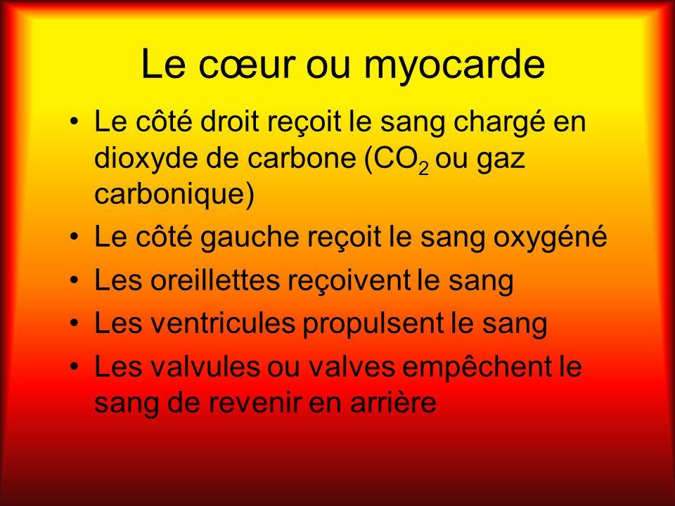 Le cœur ou myocarde Le côté droit reçoit le sang chargé en dioxyde de carbone (CO2 ou gaz carbonique)