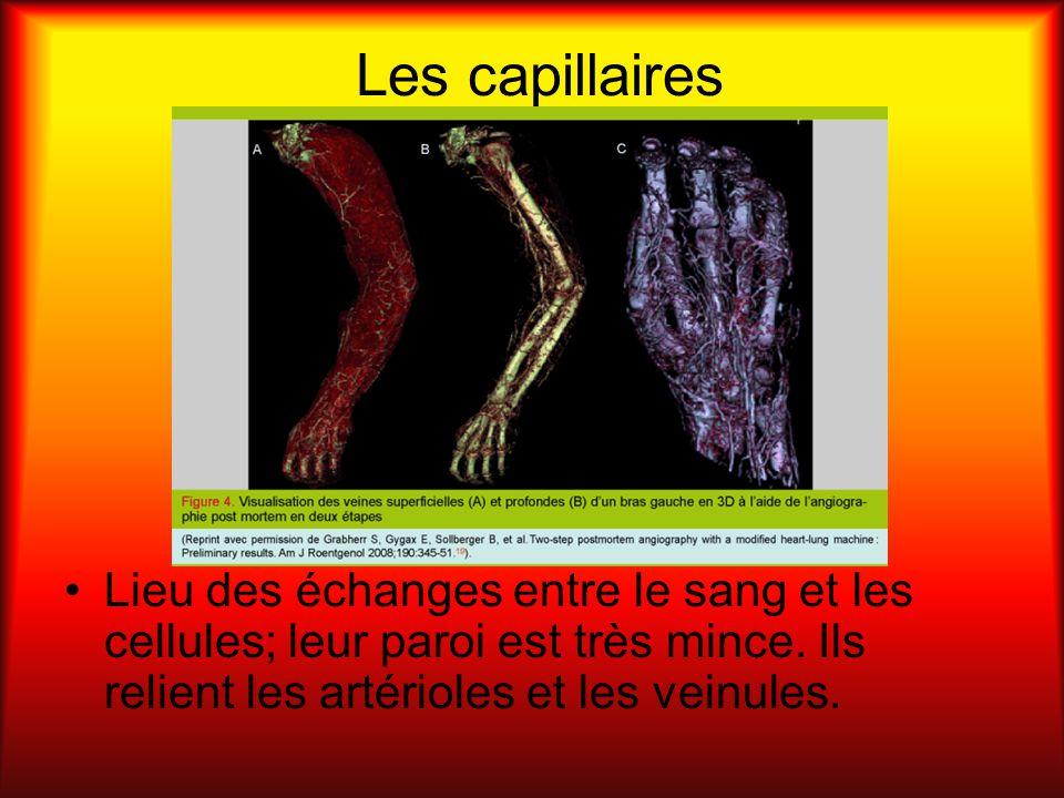 Les capillaires Lieu des échanges entre le sang et les cellules; leur paroi est très mince.
