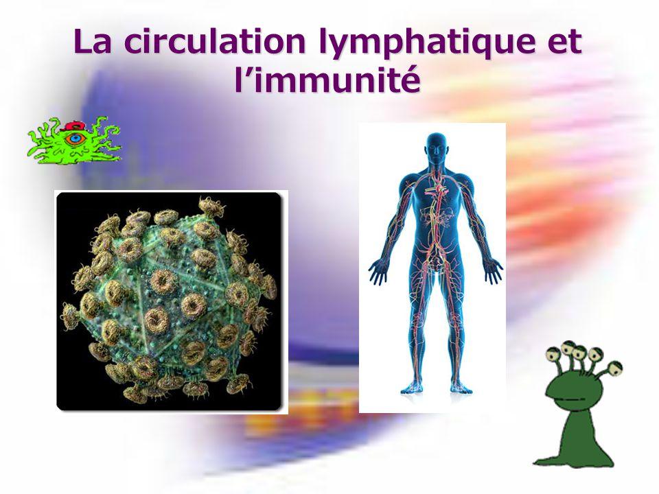 La circulation lymphatique et l'immunité