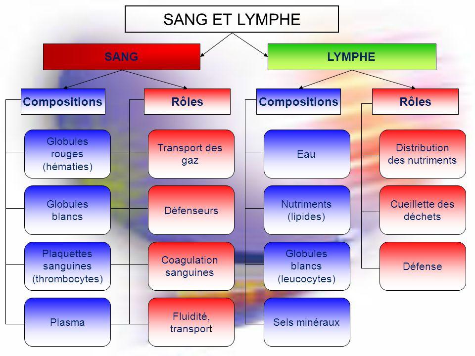 SANG ET LYMPHE SANG LYMPHE Compositions Rôles Compositions Rôles